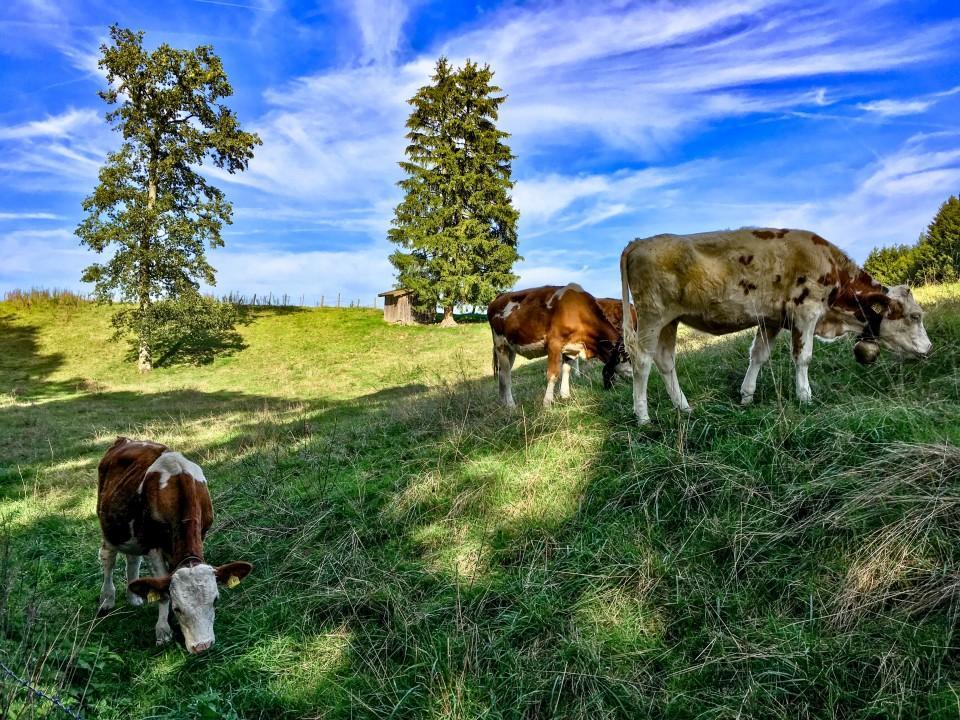 Unterwegs bei Habach, im Landkreis Weilheim-Schongau.