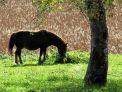 Erlebnis Oberland: Pferd in Landschaft 2