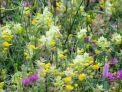 Erlebnis Oberland: Gräser und Blüten