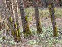 Erlebnis Oberland: Bäume mit Graslandschaft