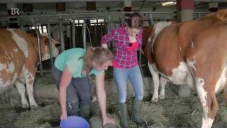 Kühe mit der Hand melken   Anleitung mit der Kathi   Dahoam in Bayern