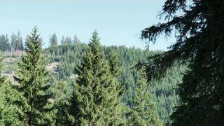 Ein bayerischer Mythos: Ohne Wald kein Leben | BR