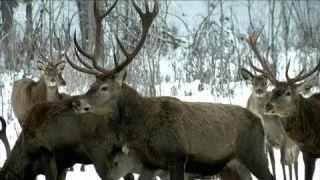 Wildfütterung im Winter: Grundsätzlich verboten, aber in Notzeiten Pflicht | BR