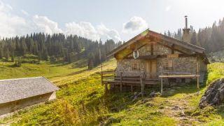 Bayerische Wildalm - Blauberge