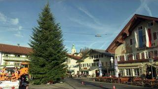 Christbaumspende: Eine Tanne für Miesbach | BR Fernsehen