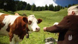 Alpenromantik? Mythos Sennerin   BR Fernsehen