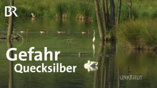 Quecksilber in Bayerns Gewässern | UNKRAUT