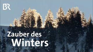 Schnee-Stimmung: Der Zauber eines Wintertags   Bergauf-Bergab